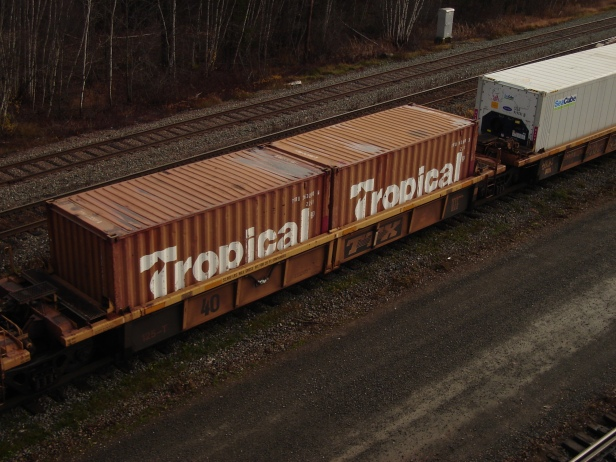 tropical-container-moncton-20161120